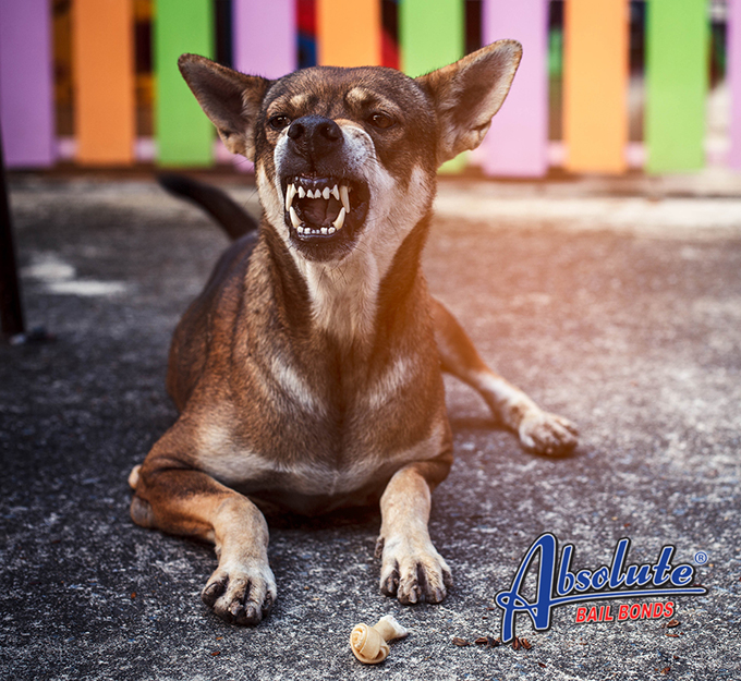 California law about dog bite