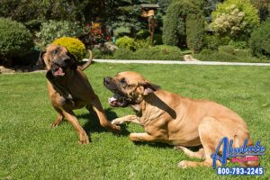 The Penalties of Dogfighting in California